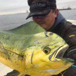 渋い中、なかなかのサイズのシイラがアタックしてきた! 東京湾で釣れてます!