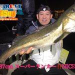 ランカーシーバスが釣れまくる熱い秋の東京湾ナイトゲーム! 85UPが出ました!