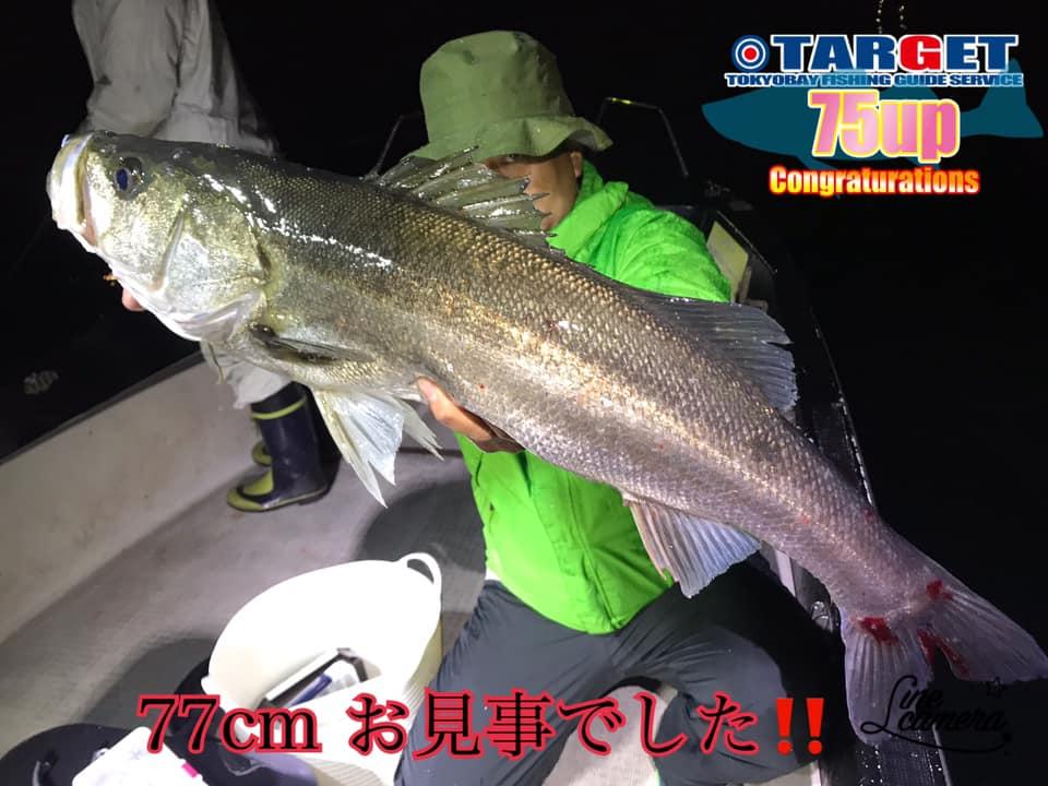 シーバスが無限に釣れるw 東京湾で77cmのランカーシーバスも釣れました!