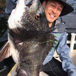 チヌの年無しサイズがヒット! 東京湾で40、50UPの黒鯛が釣れてます!