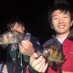 東京湾のメバル、まだ狙えます! シーバス&メバル用ルアーは多目のご用意で!