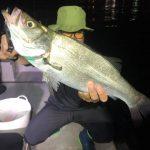東京湾シーバスが3時間釣れ続ける入れ食いナイトボートゲーム!ヒラフッコも釣れたよ!