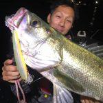 秋の東京湾のシーバス釣果が上向き!70cmUPのランカーシーバスも釣れました!