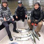 東京湾のサワラがまだまだ釣れる!11月下旬にシーバスまじりの釣果!