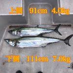 サワラの1mオーバーが釣れた!釣れたルアーを紹介&シーバスの釣果も好調です!