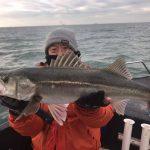 東京湾で冬らしい極太シーバスが釣れてます!水面表層でサワラも楽しめました!