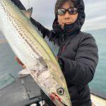 年末の東京湾でまだサワラが釣れてる!もしかしたら年越しの釣果も期待できるかも?!