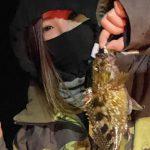 冬になってメバルの釣れ始め!ロックフィッシュの楽しい時期がやってきました!