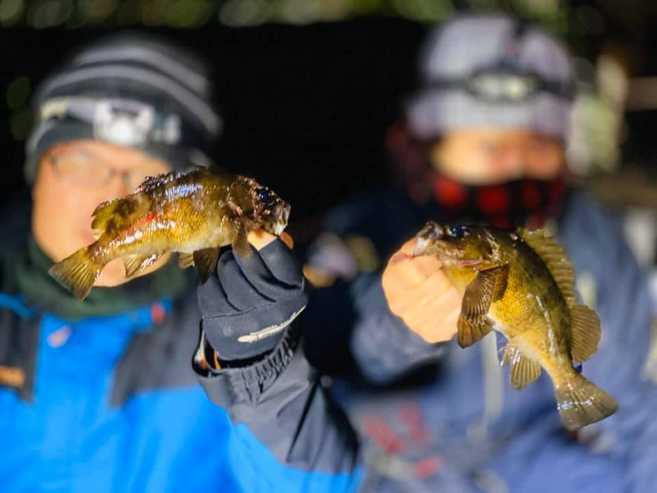 東京湾でメバリングしてたらアジも釣れた!尺近いメバル・カサゴ釣れてます!