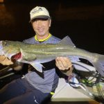 東京湾が秋めいてきた!良型シーバスまじり&数釣りの釣果で好調です!