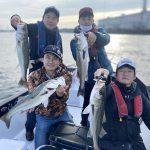 東京湾のシーバスがボッコボコに釣れる!釣果が楽しめる時期になってきました!