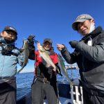 東京湾ボートシーバス全員安打!ビッグな40cmのサバも釣れました!w