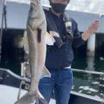 苦戦する中、縦の釣りでシーバスをキャッチ!初ゲスト様にも釣っていただきました!